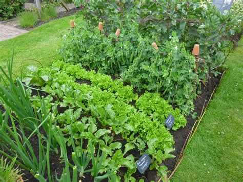 garden fruits and vegetables what to do in the your fruit and vegetable garden in