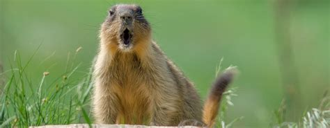 groundhog day paycom 4 hr mistakes to avoid on groundhog day