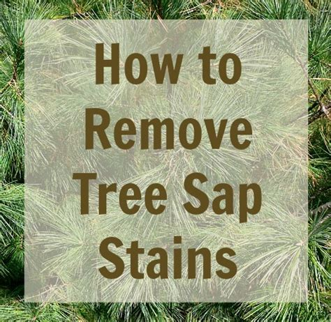 how to clean tree on the spot how to remove tree sap stains