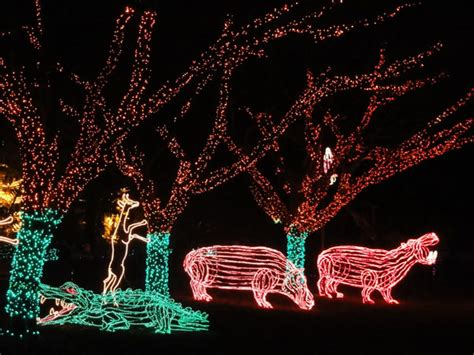 zoo lights miami zoo miami lights 28 images the 202 zoolights