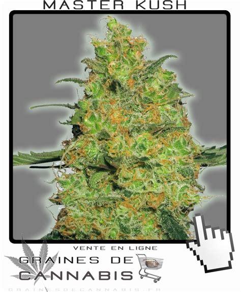 culture de cannabis en int 233 rieur graines de cannabis