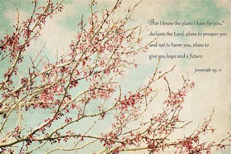 pictures blossom tree quotes quotesgram
