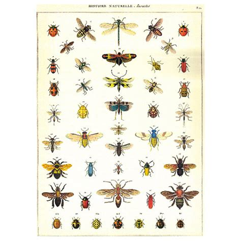history of decoupage decoupage paper insects history of nature history of bugs