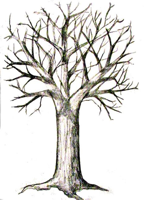 tree drawing how to draw a tree