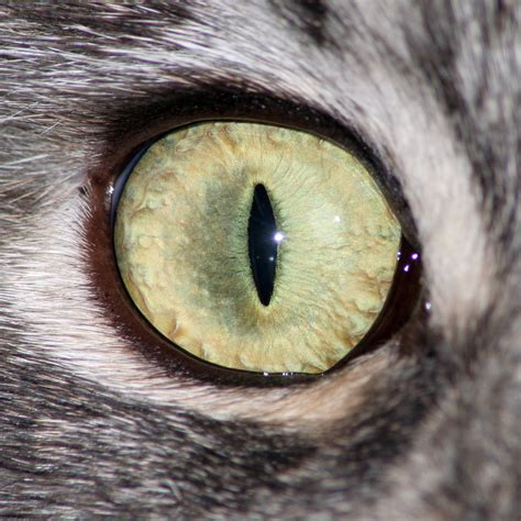 cat eye 1500 px cat eye by hoschie stock on deviantart