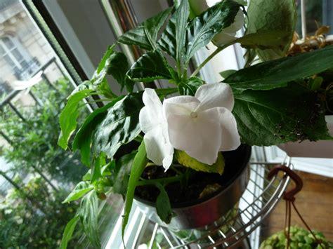 plante fleurie d int 233 rieur page 2 c 244 t 233 jardin