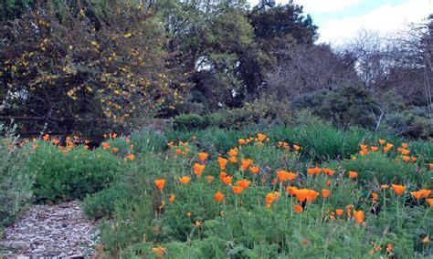 rancho santa botanic gardens 16 gorgeous los angeles botanical gardens you definitely