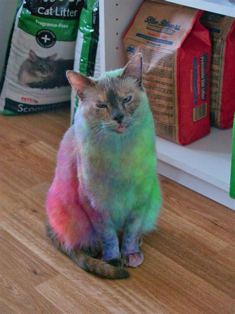 how to do a cat tie dye the cat ka0sbl