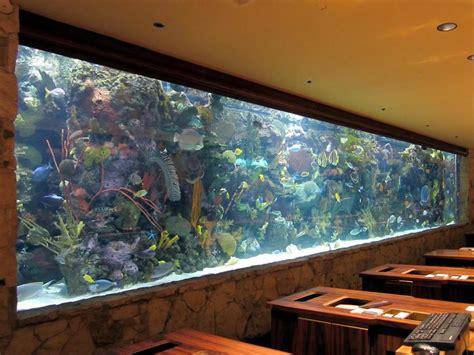 Big Tropical Fish For Aquarium   Aquarium Design Ideas