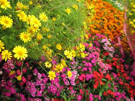 flower garden photos how to grow garden flowers successfully
