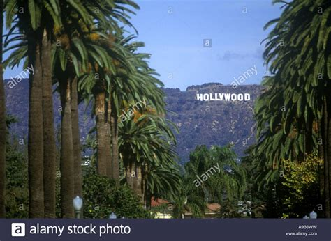 live trees los angeles palm trees sign boulevard los