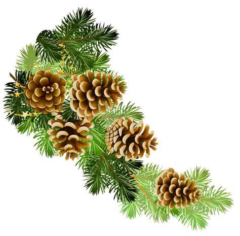 with pine cones pine and pine cones branch border clip clip