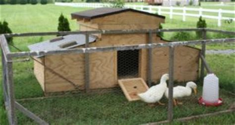 Build An A Frame 10 diy chick brooder keep baby chicks safe and warm the