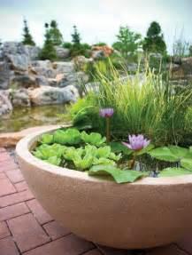 jardin aquatique en pot une oasis 224 mettre au balcon