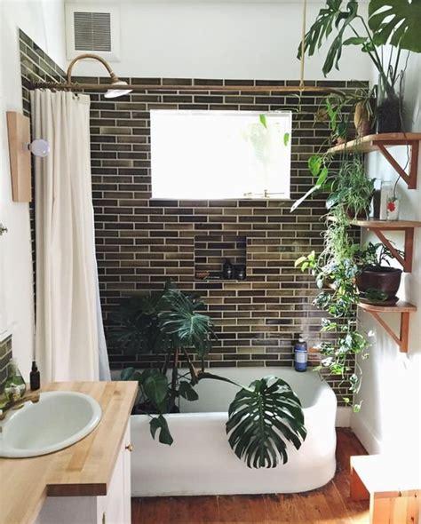 quelle plante peut on mettre dans une salle de bain magazine avantages
