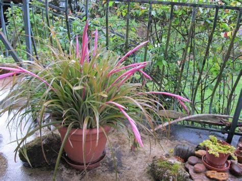 qui peut donner un nom 224 cette plante d ext 233 rieur forum voyage plantes et arbres d ornements