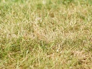 Wann Wächst Rasen : rasenpflege tipps f r fr hjahr sommer herbst winter ~ Markanthonyermac.com Haus und Dekorationen