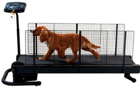 fitness etap chien toiletteur 224 t 233 l 04 93 62 19 36