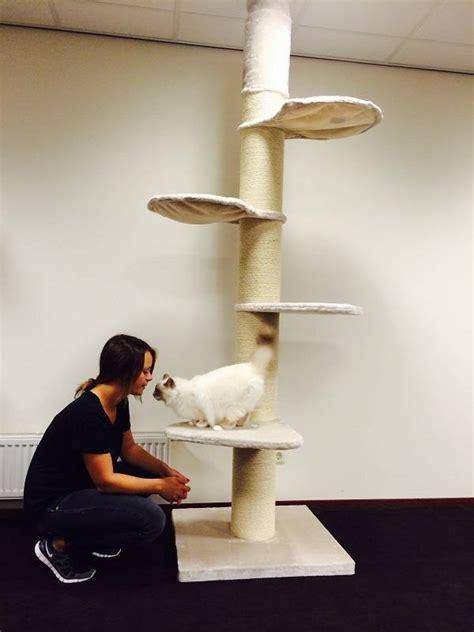 trouvez ici votre arbre 224 chat pour grands chats comme le maine coon ou le ragdoll