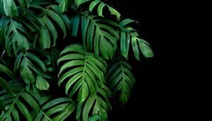 Gesunde Luftfeuchtigkeit In Räumen : luftfeuchtigkeit durch pflanzen erh hen brune magazin ~ Markanthonyermac.com Haus und Dekorationen