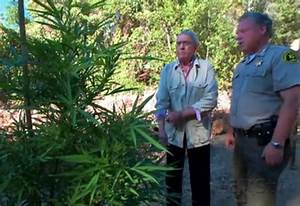 Dan Rather Goes on a Marijuana Mission in Humboldt for AXS ...