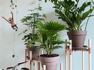 Pflanzen Zu Hause : dschungel f r zuhause diy pflanzenst nder aus kupfer und holz craftifair ~ Markanthonyermac.com Haus und Dekorationen