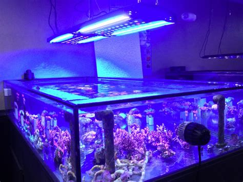 led t5 combo where are the fixtures reef2reef saltwater and reef aquarium forum