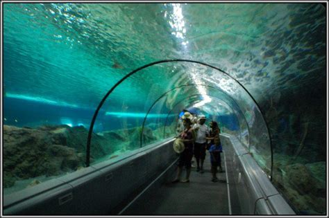 articles de parc attraction tagg 233 s quot aquarium quot les parcs d attractions fran 231 ais skyrock