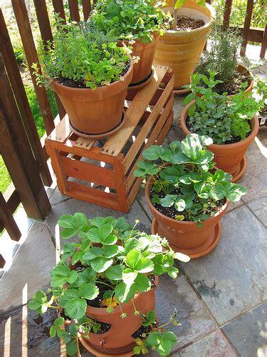 3 Ways How To Start Indoor Vegetable Garden For Beginners