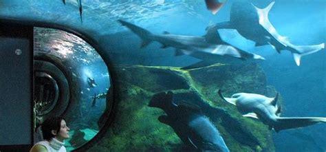 aquarium la rochelle a la une zoo aquarium en nouvelle aquitaine proxifun