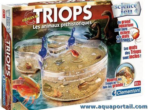 un 233 levage de triops en aquarium invert 233 br 233 s d eau douce