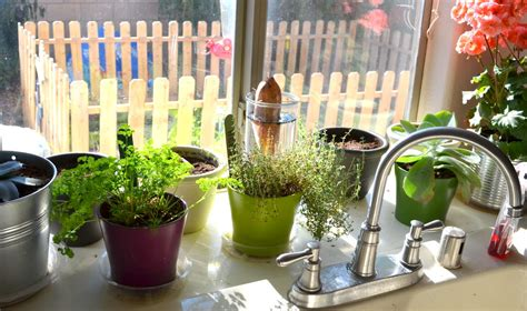 Plants For Kitchen To Decorate It