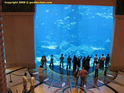 aquarium at atlantis dubai hotel atlantis dubai dubai aquarium and hotels