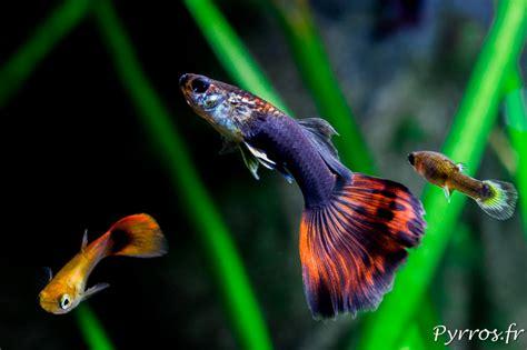 comment photographier les poissons dans aquarium