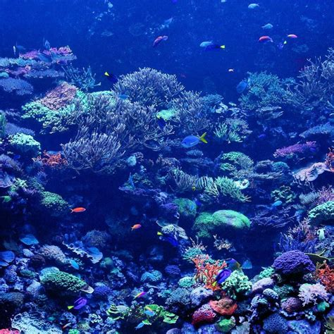 10 New Coral Reef Wallpaper 1920x1080 Full Hd 1080p For Pc