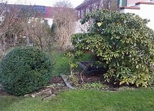 Stauden Für Den Schattigen Garten : immergr ne pflanzen f r den garten im winter der wohnsinn ~ Markanthonyermac.com Haus und Dekorationen