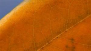 Lorbeer Gelbe Blätter : lorbeer hat gelbe bl tter woher kommt 39 s ~ Markanthonyermac.com Haus und Dekorationen