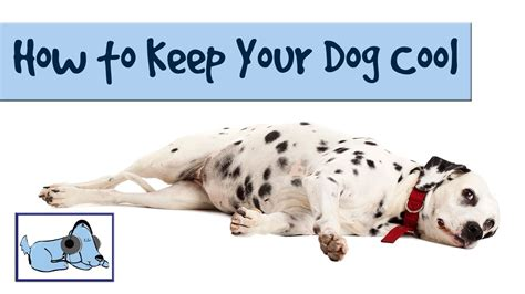 How To Keep Your Dog Cool In The Summer Heatwave Hot
