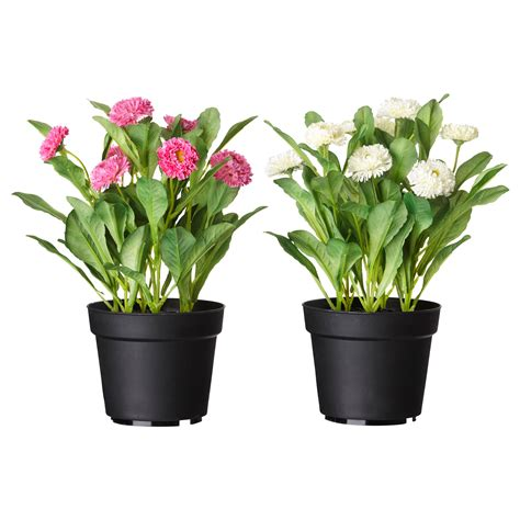 fejka artificial potted plant common assorted colours 12 cm ikea