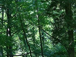Das Herz Des Waldes : baumgedichte baum gedichte gedichte ber b ume ~ Markanthonyermac.com Haus und Dekorationen