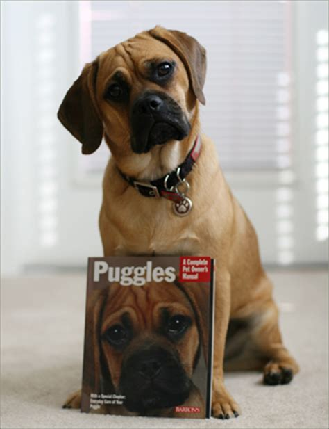 does puggle shed a lot
