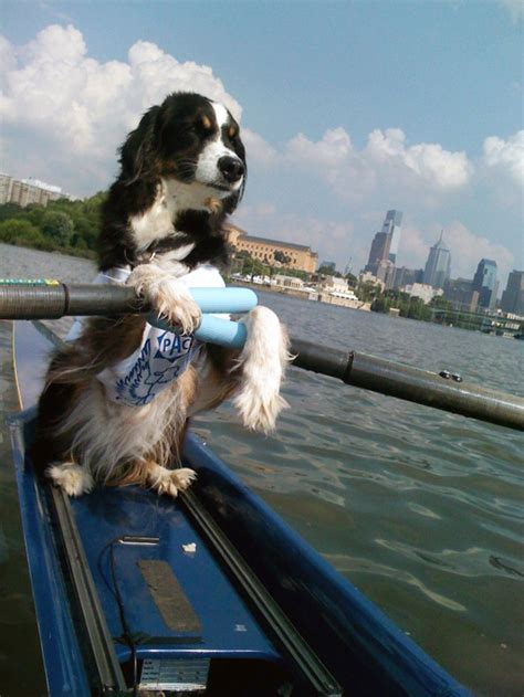 Boat Dog Quotes by Favorite Boathouse Dog Finalists Rowing Photo Row2k