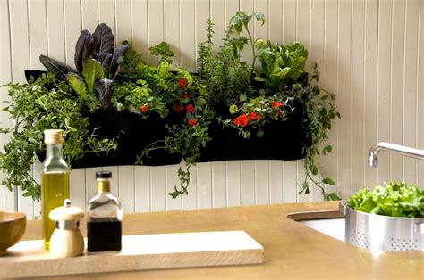 Indoor Kitchen Herb Gardens  Just In Time For Spring