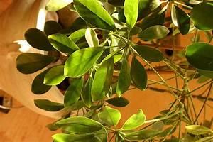 Feng Shui Pflanzen Reichtum : feng shui wohnzimmer pflanzen raum und m beldesign inspiration ~ Markanthonyermac.com Haus und Dekorationen