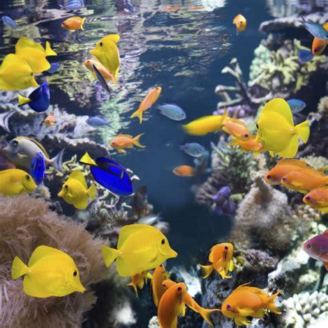 poissons d aquarium tout sur les poissons domestiques et les hibiens doctissimo