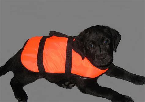 Zwemvest Met Kraag by Puppycursus En Andere Hondentrainingen Op Maat Bij 250 Thuis