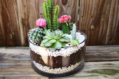 Indoor Cool Cactus & Succulent Projects  The Garden Glove
