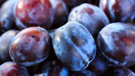 la prune le fruit de la rentr 233 e chefs pourcel