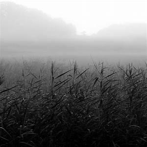 Kaffeetassen Schwarz Weiß : bilderwald landschaftsfotografie in schwarzweiss oder doch farbig ~ Markanthonyermac.com Haus und Dekorationen