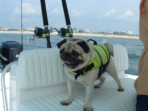 Dog Boat Captain by Your Best Dog On You Boat Pic The Hull Truth Boating
